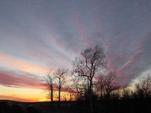 O ouro do rosa do céu do por do sol do inverno nubla-se árvores da silhueta Imagem de Stock