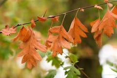 O outono é comminng imagem de stock