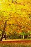 As cores do outono Imagens de Stock
