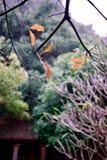 O outono imagem de stock