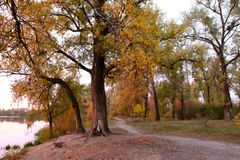 O outono ajardina brotos vivos Imagens de Stock