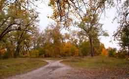O outono ajardina brotos vivos Foto de Stock Royalty Free