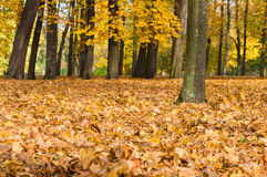 O outono caído colorido amarelo e a laranja saem no parque Imagem de Stock Royalty Free