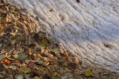 O outono caído sae no fundo natural da água da espuma Imagens de Stock Royalty Free
