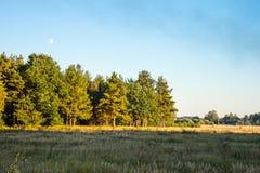O outono Campo e floresta na luz do por do sol do Sun Fotos de Stock