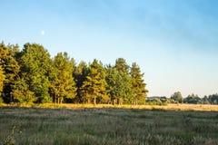 O outono Campo e floresta na luz do por do sol do Sun Imagem de Stock