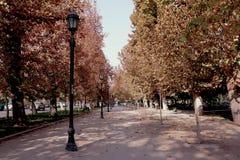 O outono chega imagens de stock royalty free