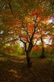 O outono colore #6 Imagens de Stock Royalty Free