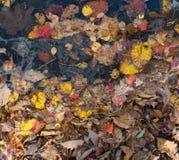 O outono colore as folhas e a água Fotografia de Stock