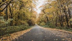 O outono colore as folhas e uma estrada Imagens de Stock
