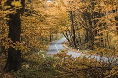 O outono colore as folhas e uma estrada Imagens de Stock Royalty Free