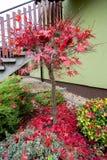 O outono colore a composição no jardim home Foto de Stock
