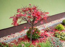 O outono colore a composição no jardim home Foto de Stock Royalty Free