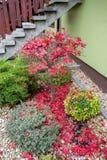 O outono colore a composição no jardim home Fotografia de Stock Royalty Free