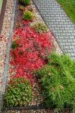 O outono colore a composição no jardim home Fotos de Stock Royalty Free