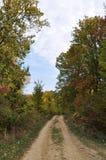 O outono colore a floresta Fotos de Stock Royalty Free