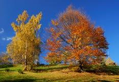 O outono colore a paisagem imagens de stock