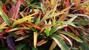O outono colore plantas Foto de Stock