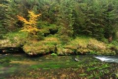 O outono colore o rio Fotografia de Stock