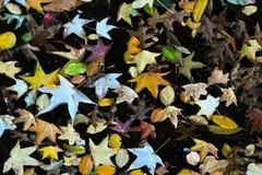 O outono coloriu a água com folhas amarelas - olhar retro do vintage Foto de Stock