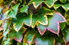 O outono coloriu as folhas Imagem de Stock Royalty Free