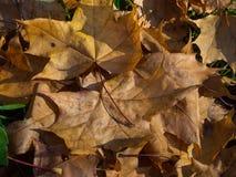 O outono coloriu as folhas foto de stock