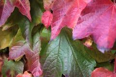 O outono coloriu as folhas Fotos de Stock Royalty Free