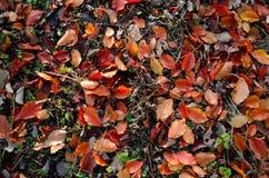 O outono coloriu as folhas Imagens de Stock