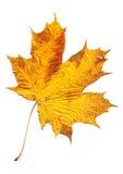 O outono coloriu as folhas Imagem de Stock