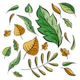 O outono deixa ilustrações de cor ajustadas imagem de stock