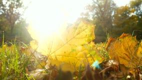 O outono deixa o sol do parque florestal vídeos de arquivo