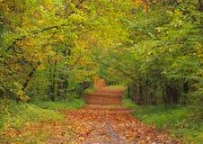 O outono dourado. Fotos de Stock Royalty Free
