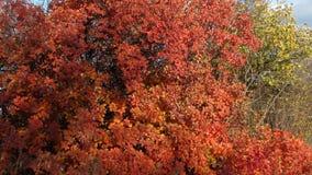 O outono dourado em Ucrânia Foto de Stock