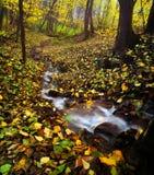 O outono dourado nas madeiras gosta do mundo mágico Imagens de Stock