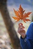 O outono e a reunião da mulher Fotos de Stock