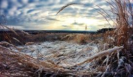 O outono encontra o inverno A neve grama-espalhada Fotos de Stock Royalty Free