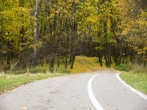 O outono entrando de giro da estrada asfaltada estaciona da vista de superfície Fotografia de Stock Royalty Free
