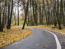 O outono entrando de giro da estrada asfaltada estaciona da vista de superfície Imagens de Stock