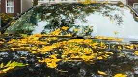 O outono está vindo Imagens de Stock