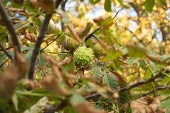 O outono está vindo Imagens de Stock Royalty Free