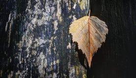 O outono está vindo Foto de Stock
