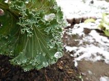 O outono floresce sob gotas e neve da chuva Imagem de Stock Royalty Free