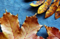 O outono folheia tabela afiada fotos de stock