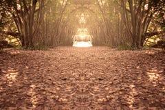 O outono nas madeiras Fotos de Stock Royalty Free