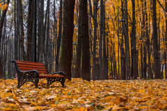 O outono no jardim de Neskuchny Imagem de Stock