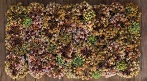 O outono panorâmico floresce o tamanho grande do fundo Foto de Stock Royalty Free
