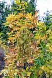 O outono pinta árvores e destaca-as com cores coloridas Imagens de Stock