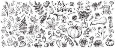 O outono planta esboços do vetor O grupo tirado mão de colheita, de folhas e de queda sazonal floresce ilustração stock
