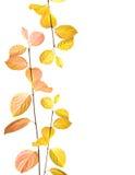 O outono ramifica e deixa a beira Imagem de Stock