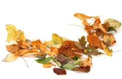 O outono secou as folhas isoladas no branco Fotografia de Stock